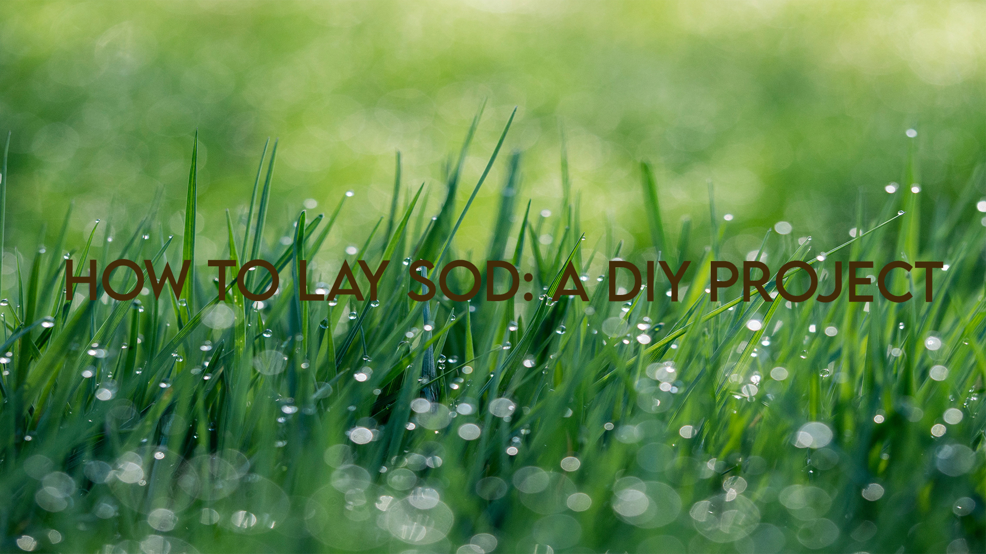 how to lay sod | Grovin Farms | Gainesville, FL