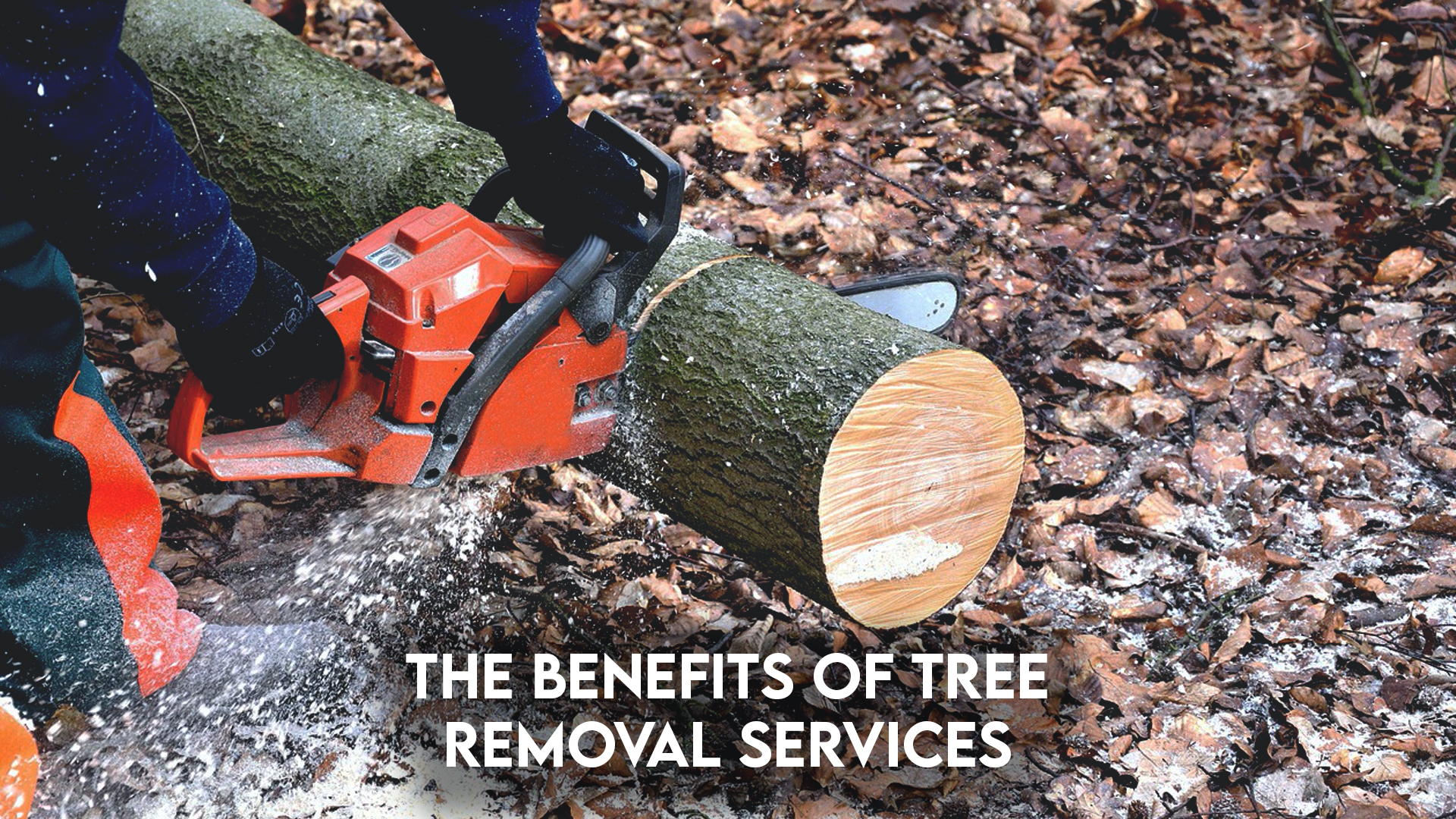 Land clearing, Ground Clearing, site development, Steelwrist Equipment, lot clearing near me, Land clearing, Ground Clearing, site development, Steelwrist Equipment, lot clearing near me, tree removal services   Grovin Farms, FL