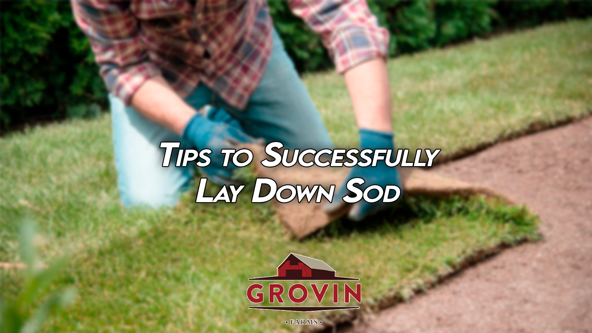 how to lay sod, tips for laying sod, sod farm florida | Grovin Farms | Gainesville, FL